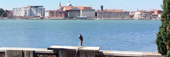 Caso di successo: Dissuasione gabbiani con sistema vocale Cimitero Monumentale San Michele in Isola – Venezia